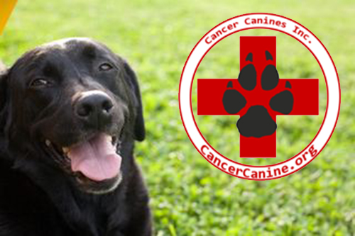 Cancer Canines, Inc. - A California Non-Profit 501(c)3 corporation. Gifts, Tax, Donations, Deductions, Canines that are trained to detect cancer.